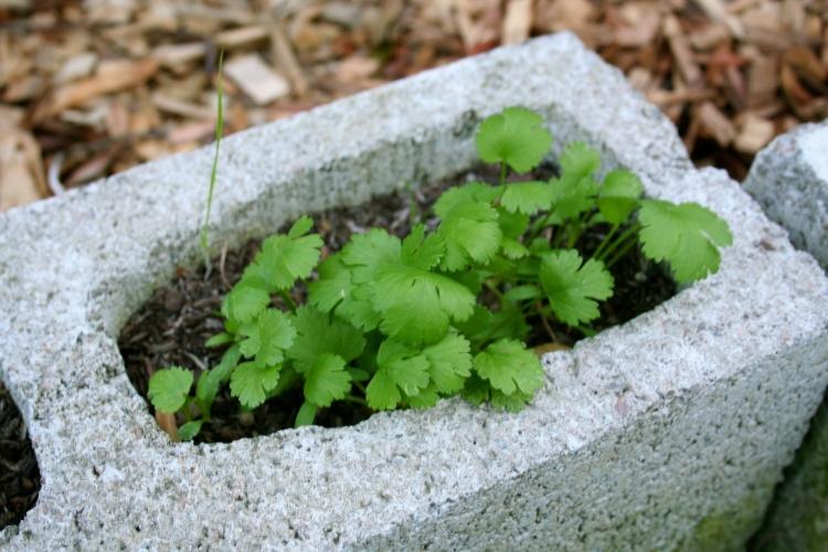 cinderblock garden 7.jpg